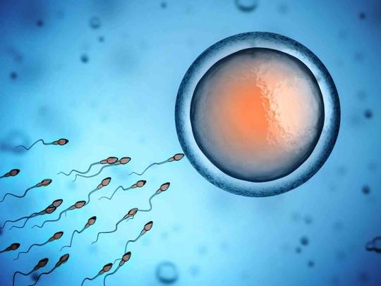 процедура с донорской спермой